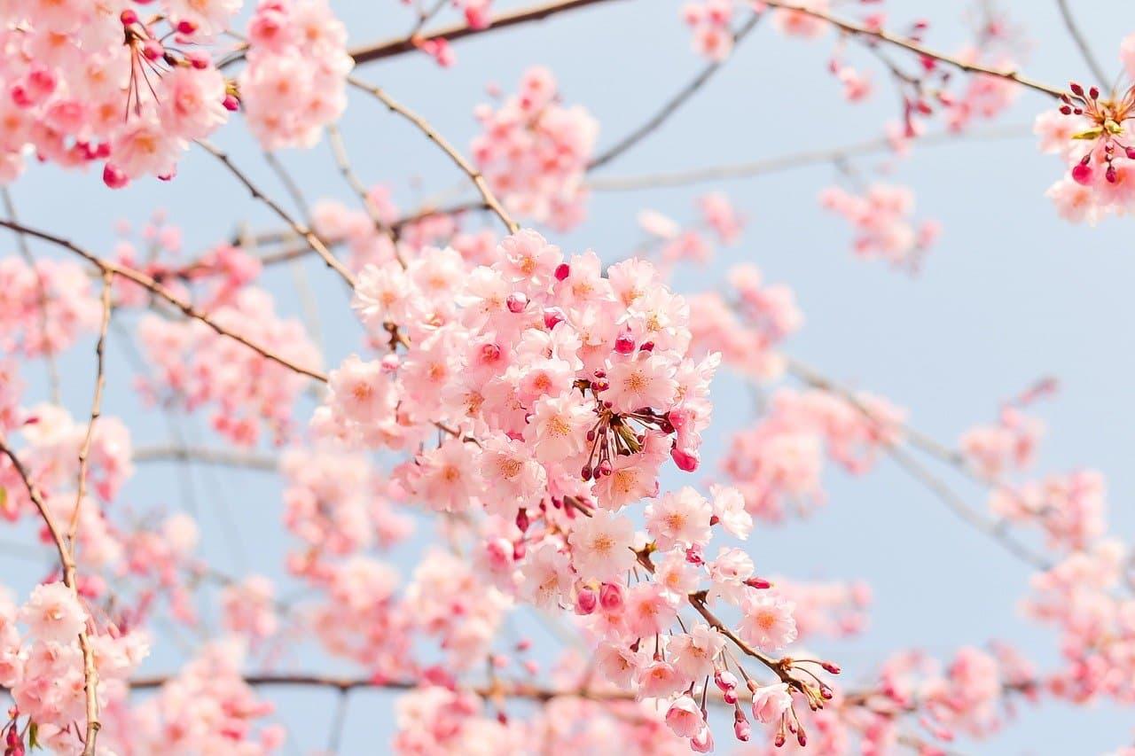桜花賞(競馬)