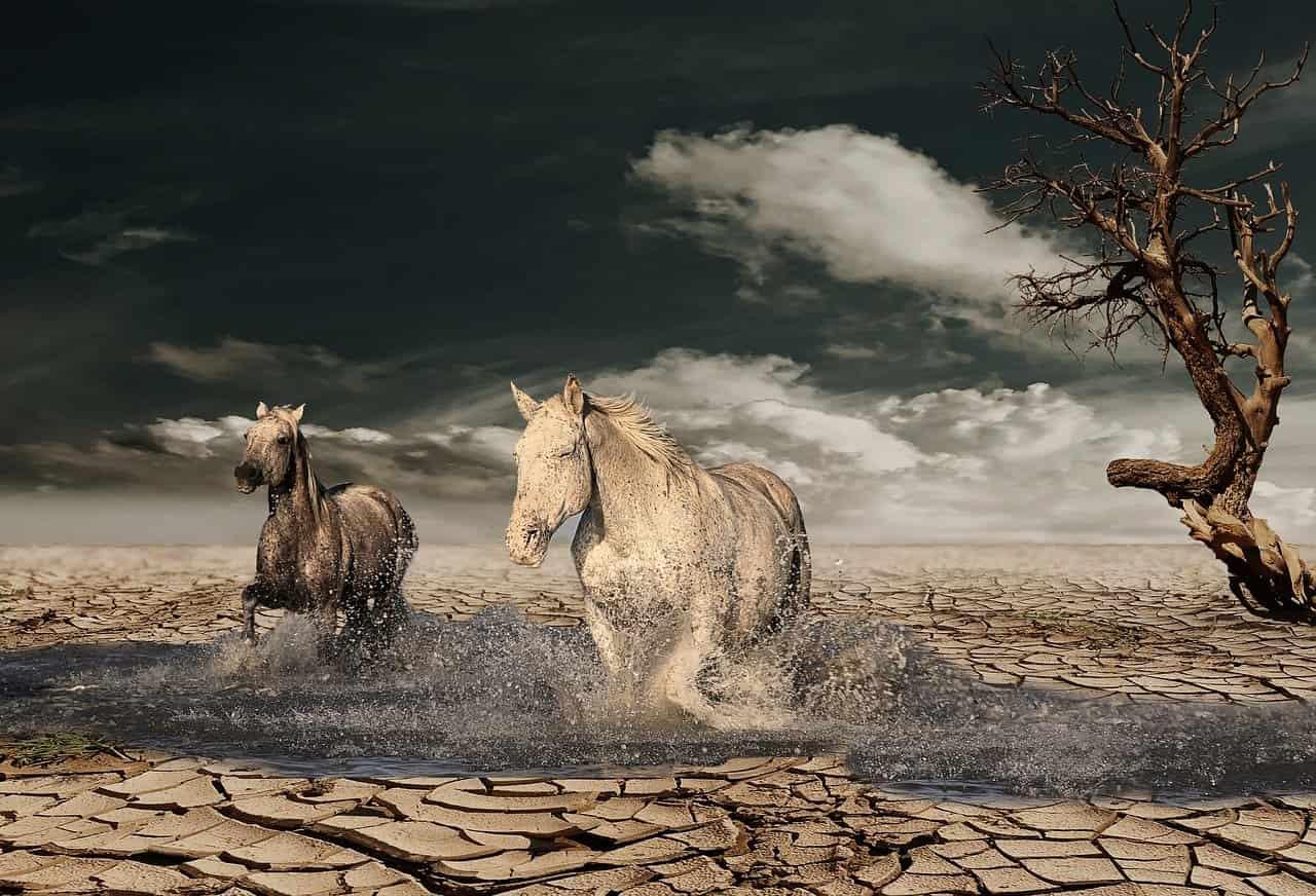 トリガミ(競馬)